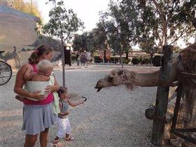 Женя кормит верблюдов
