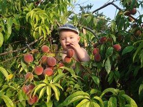 Самый сладкий персик  нашем саду!!!
