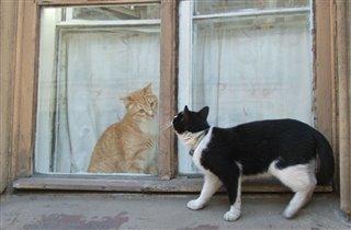 питерские кошки