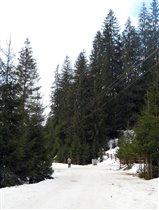 Карпаты, Верховина, вековой лес