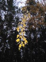 Золотая осени гирлянда