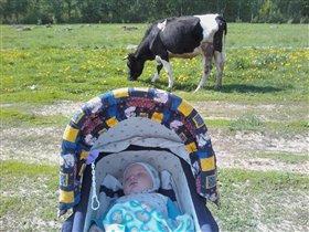 'Я  сплю, а кругом коровки гуляют..КРАСОТА!'