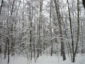 Блиц: лес
