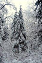 Лесные красавицы в зимнем наряде