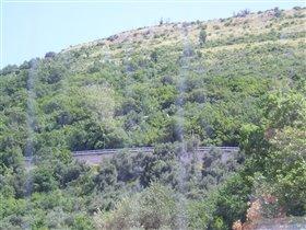 Оливковая роща на Балканах