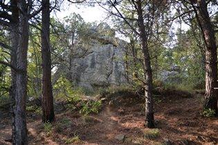 Крымский лес