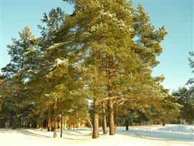 Как прекрасен зимний лес!