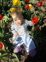 Арсений 'Какие красивые тюльпаны у нас на дачи'.