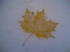 Осенний лист зимой