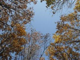 небо через осенний лес