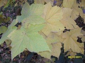 Листья....