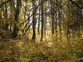 волшебство осеннего леса