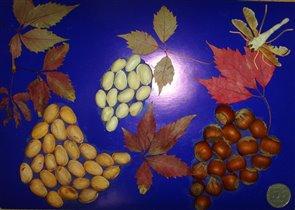 Стрекоза и виноград
