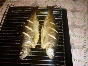 Рыба (Форель)