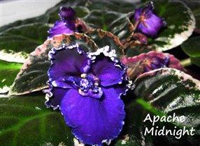 Apache  Midnight