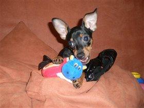 Моя маленькая собака.