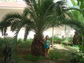 ВАУ! Вот это пальма!