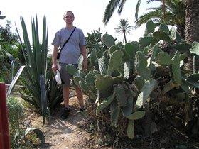 А-а-а-а в Африке вот такие кактусы