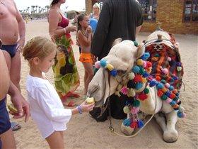 Маша и верблюд