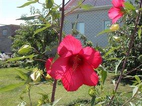 Необыкновенный цветок....