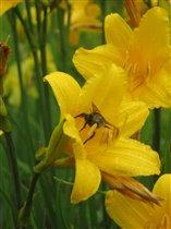 жжжжжжелтый цветок