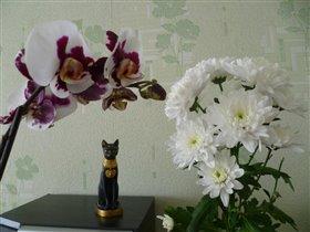 орхидея и хризантема