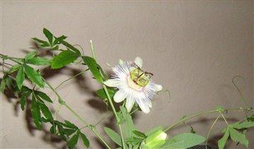 загадочный цветок....