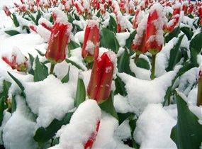 Как прекрасна ранняя весна!