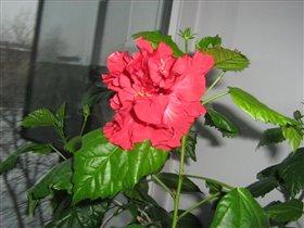 Блиц: цветы