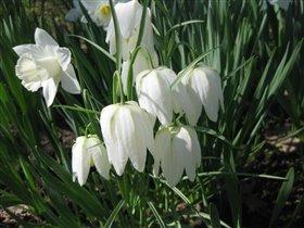 Весна-она прекрасна как цветы