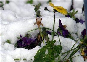 Снежные капризы