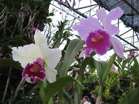 Парк орхидей в Патаййе