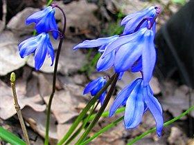 Самый весенний цветок