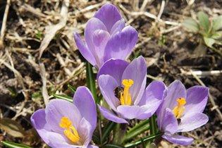Цветы и пчелы - это разгар весны и близость лета