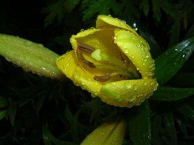 начало жизни после летнего дождя...