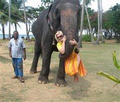 Слонячьи нежности