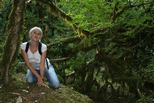 Реликтовый самшитовый лес,Сочи