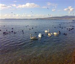 черное море зимой