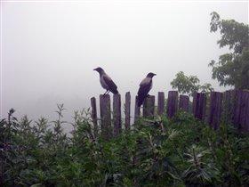 Свидание в тумане...