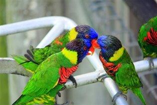 Птички :)