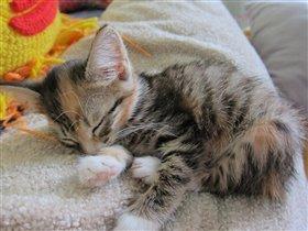 Рикка спит, она устала...