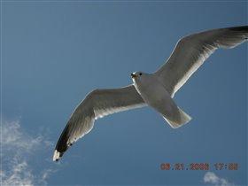 Полет чайки....