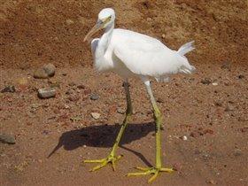 Египетская птичка