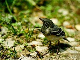 Птичка может полюбить рыбку, но где им жить?