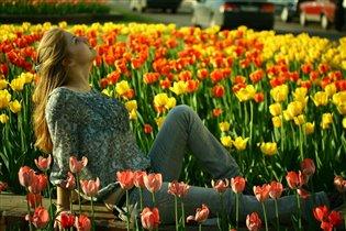 Тюльпаны и нарциссы—оранжево-золотистая буря весны