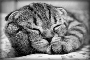 Про подушку :)