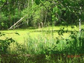 Обманчивое болото