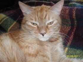 Тигра-кот Баксик!