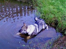 Мой любимый 'волк'