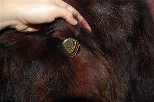 Натуральная шуба из лисы